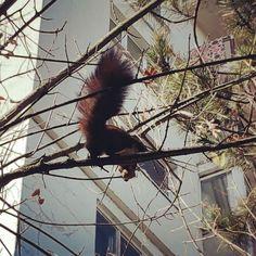 Urban beast. #squirrel #nature #Cluj #Transylvania #Romania #tree