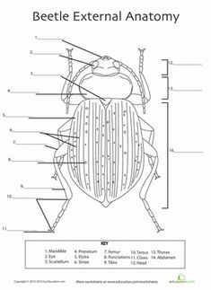 Printables Grade 8 Science Worksheets pinterest the worlds catalog of ideas fifth grade life science worksheets beetle anatomy
