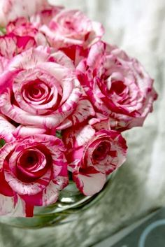 Peppermint Roses - Gorgeous !