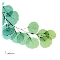 Eucalyptus+Green