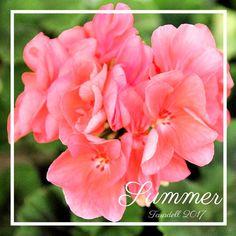 #sensefiltre #plantes #flors #Catalunya #paíspetit #naturalesa #flora #fotografia #colors  #casa #estiu #flowers #plants #Catalonia #nature  #instagood #macro #canon #photograph #house #summer