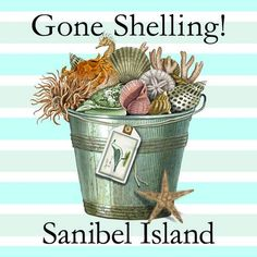 Gone Shelling!....went shelling every day with Mom and Julia when we were there! I miss that so much now!