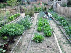 [오래된 집 복원기] #33 시골집을 내 손으로 고치는 재미 : 네이버 블로그 Plants, Plant, Planets
