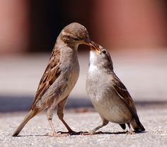 Female Sparrow by *Cristiana*, via Flickr