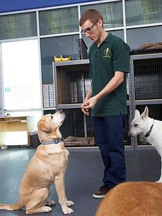 How to Clicker Train Your Dog Interested in the best training techniques for your pet but unsure of where to start? Learn the basics of clicker training for a humane training technique used by many advanced animal-training professionals. Visit Us Dog Clicker Training, Training Your Puppy, Dog Training Tips, Training Schedule, Training Classes, Art Beagle, Beagle Pups, Doggies, Beagles