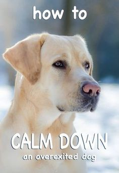 Dog calming - how to calm a dog down - great tips and advice