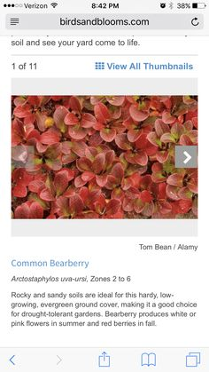 http://www.birdsandblooms.com/gardening/top-10-lists-for-gardeners/top-10-plants-rocky-soil/?10