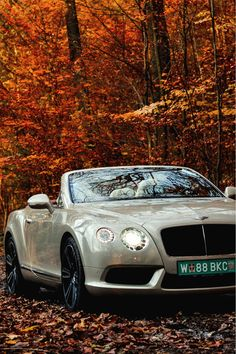 """Bentley Continental GT Cabriolet.. okay so this is not for the lighthearted!... Can you say """"Go""""!"""