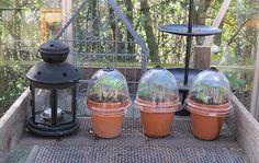 """Pelargonier er normalt sommerblomster i Lotte Bjarkes have, men hun har en speciel pelargonie, som allerede står med et par blomsterskærme nu. Den har oven i købet givet lidt """"familieforøgelse"""". Bird Feeders, Planters, Garden, Outdoor Decor, Home Decor, Courtyards, Creative, Garten, Decoration Home"""
