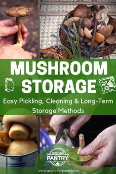 How To Store Mushrooms, Growing Mushrooms At Home, Stuffed Mushrooms, Mushroom Guide, Mushroom Grow Kit, Mushroom Recipes, Moral Mushrooms, Pickled Sausage, Recipes