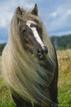 Such an interesting looking horse. Beautiful and mysterious.