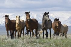 The Altai Horse can be traced back to nomadic times, making them one of the oldest breeds of horse in the world