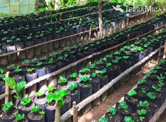 Coffee seedlings, ready to plant on a coffee farm we work closely with. Healthy agriculture can provide a pathway out of poverty for many farming families. It's why we value working with farmers in remote regions and helping them develop greater sustainability.