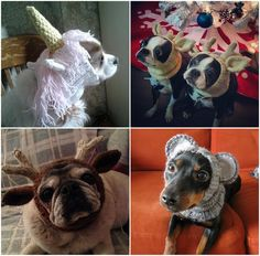 Knitted Dog Hats FREE Patterns