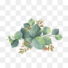 watercolor leaves, Watercolor Clipart, Leaf, Green PNG Image and Clipart Free Watercolor Flowers, Watercolor Leaves, Watercolor Art, Watercolor Wallpaper, Watercolor Branding, Watercolor Illustration, Green Flowers, White Flowers, White Flower Png