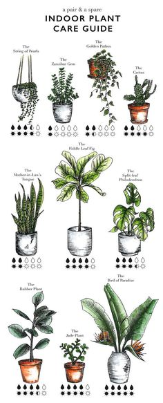 Illustrated indoor plant care watering guide