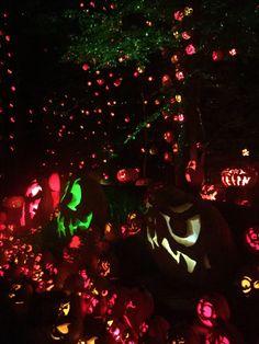 Louisville Jack O lantern spectacular! 5000 beautifully carved pumpkins 🎃