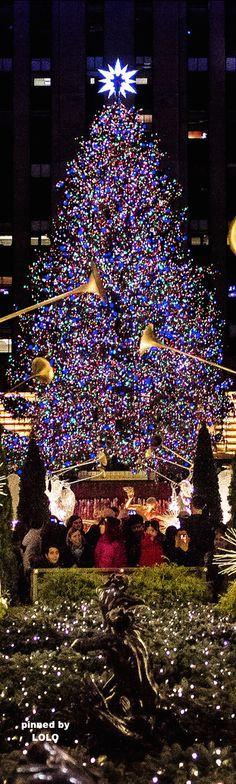 Los americanos son obsesionado con la Navidad. Todos los lugares públicos tienen decoraciones. Hay luces en los árboles y hay música en los conteos comerciales.