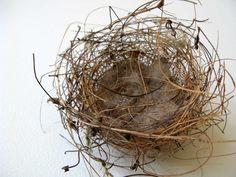 nest : bird