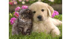 Be a Pet or Adopt One! [ ORIGINAL ] - ROBLOX