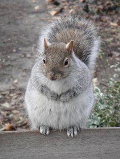 19 Fat Squirrels That Totally Over Ate This Winter – Pleated-Jeans.com
