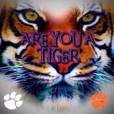 Football Run, Clemson Football, College Football Teams, Football Stadiums, Clemson Tigers, Auburn Tigers, Lsu, Tiger Girl, Tiger Paw