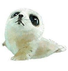 Baby #Seal - illustration
