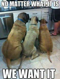 Typical dog :)