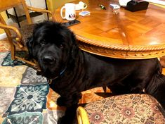Photo - Google Photos Newfoundland Dogs, Gentle Giant, Dog Breeds, Photo And Video, Google, Photos, Animals, Pictures, Animales