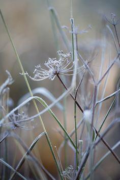A Touch of Frost Dianna Jazwinski