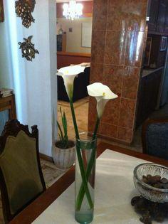 Alcatraces en florero.