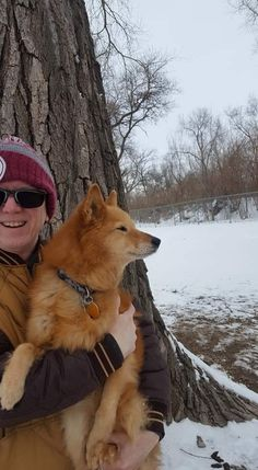 Spitz Dog Breeds, Spitz Dogs, Animals And Pets, Dogs And Puppies, Corgi, Fox, Kawaii, Bird, Cute