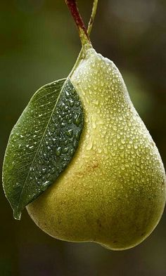 Trendy dancing in the rain photography beauty life Ideas L'art Du Fruit, Fruit Art, Fruit And Veg, Fruit Trees, Fruits And Vegetables, Fresh Fruit, Pear Fruit, Fruit Salad, Fresh Water