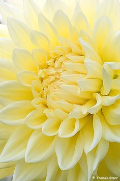 171 best yellow images on pinterest colors yellow and r color palette burst into pale yellow bloom mightylinksfo