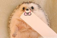 Adorable Hedgehog Humorously Disguised with Illustrated Masks - My Modern Metropolis