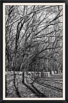 https://flic.kr/p/rjeqRw | Reflection of Trees - Symmetry in Winter