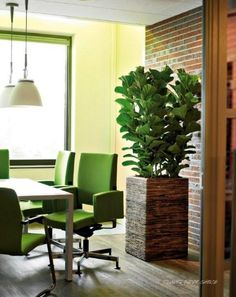 perfect office plants