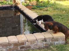 Ponds and water features can double as a place for pets to fish-watch or take a swim >> http://www.hgtv.com/decorating-basics/cute-pets-in-our-favorite-spaces/pictures/index.html?soc=pinterest