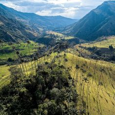 The Cocora Valley Wax Palm Quindio Colombia #Andes...