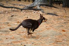 Quinn on the Run | Flickr - Photo Sharing!