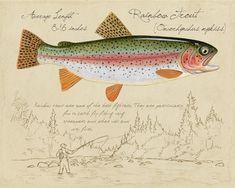 Dibujo científico Pez Trucha asalmonada Caballa Pike 12X16 pulgadas impresión arte enmarcado