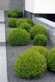 DIY landscaping ideas easy landscaping ideas for small front yard. Simple Front Yard Landscape Design. Small, low maintenance garden: Minimalist Garden. #moderngardendesign