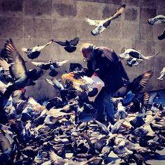 L'homme aux oiseaux #Surenchère #Pigeons #Beaubourg
