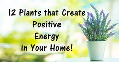 12 Plants That Create Positive Energy in Your Home! – South Tips