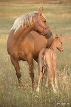 Gorgeous Palomino Mare and Pretty Dun Foal. ...........click here to find out more http://googydog.com