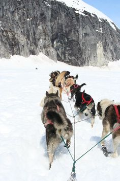 Mush! Huskies lead the way in Juneau, Alaska.