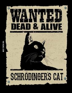 You are in the right place about cute Nerd Humor Here we offer you the most beautiful pictures about the Nerd Humor jokes you are looking for. When you examine the Schrödingers cat. Nerd Jokes, Nerd Humor, Brexit Humour, Funny Shit, Funny Memes, Funny Laugh, Cat Memes, Funny Cats, Funny Stuff