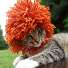 Convierte tu gato en un león con un simple gorro! La última moda para gatos