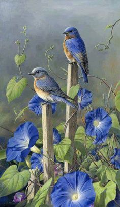 Ideas painting love birds bluebirds for 2019 Pretty Birds, Love Birds, Beautiful Birds, Beautiful Images, Beautiful Family, Simply Beautiful, Animals And Pets, Cute Animals, Tier Fotos
