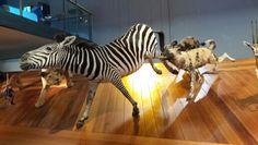 The Naturalis Museum.